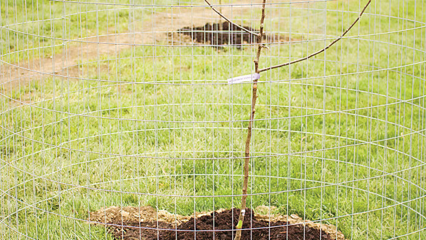 Saturday April 23, willing volunteers and members of the Eco Reps planted an apple orchard on campus. The orchard is located between Steese Cottage and the tennis courts. This installment […]