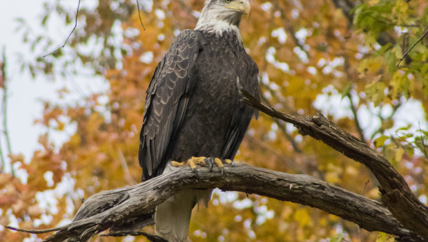 Birds of prey will occupy the Quad on Saturday at 12:30, when master falconer, Pete Lotz, will present a flight demonstration featuring hawks, falcons, owls, and several other species of […]