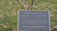 Cuttings from Isaac Newton's Tree Planted in Houghton For centuries, elementary school teachers have told their students the story of the apple that fell from a tree onto Sir Isaac […]
